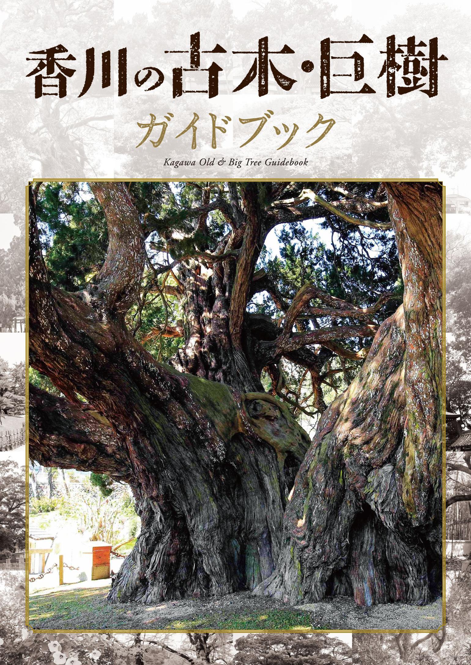 香川県,古木,巨樹,木